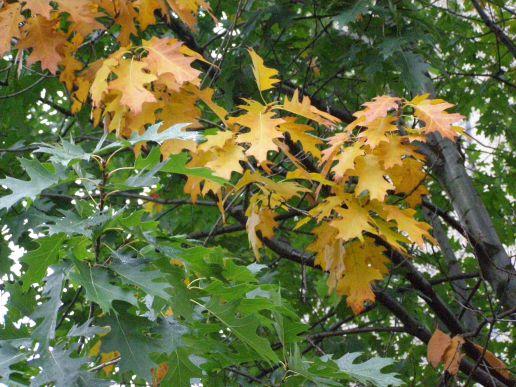 przedszkolne drzewo