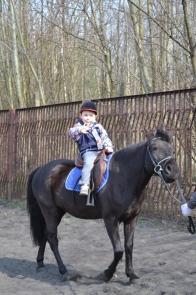 konie radzio