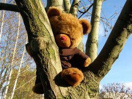 Peregryn na drzewie