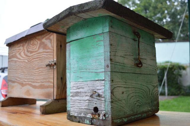 pszczoly-19