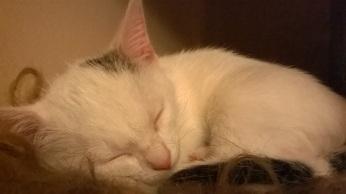 kocie-drzemki-milka